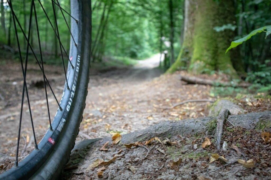 tahrrad handyhalterung test wald trail